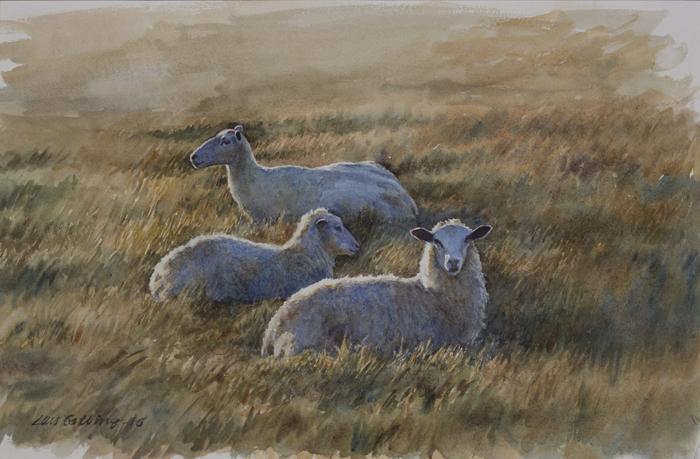 Vilande lamm